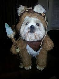 Funny Dog Costumes Halloween 35 Halloween Costumes Dogs Images Pet