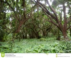 enchanted forest stock photo image 45537077