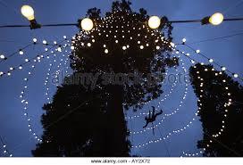 wakehurst place christmas tree stock photos u0026 wakehurst place