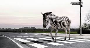 Zebra Floor L Marvelous One Floor Home Plans 6 Zebra Crossing L Jpg Wolofi