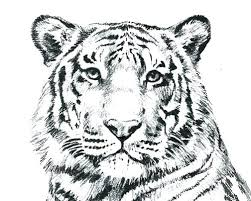 coloring page tiger paw tiger color page smartgoalsbook info