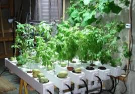 growing herbs indoors under lights herb garden grow light elegant 3 ways to grow herbs indoors under