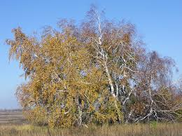 ttees meaning copse definition and synonyms of copse in the english dictionary