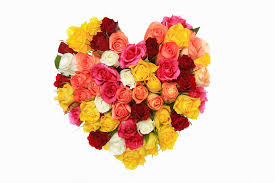 sacred roses the spiritual symbolism of the rose