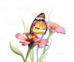 beautiful watercolor butterfly and flowers stock vector