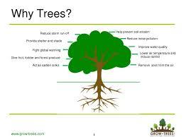 help us plant more trees www aridzoneafforestation org aza