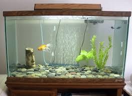 extraordinary home aquarium ideas for your home decorations fish