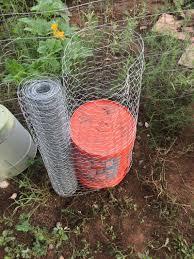 flagstaff native plant and seed northern arizona tomato jim