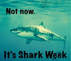 Shark Week Meme - 22 best shark week images on pinterest sharks shark and ha ha