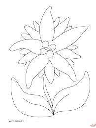 piante aromatiche disegni colorare babbo natale decorazioni