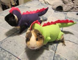 Funny Animal Halloween Costumes 25 Terrifyingly Cute Halloween Costumes Pets Bored Panda
