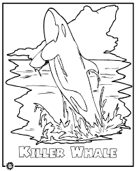 Killer Whale Orca Coloring Page Animals Town Animals Color Color Page