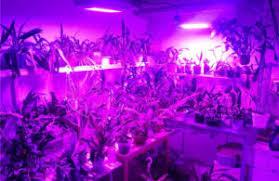 best led grow lights for marijuana best led grow lights for weed in 2017 growing marijuana pro