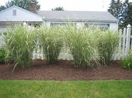 landscaping with ornamental grasses design home ideas pictures