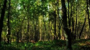 trees nature plant tree woods green yellow colors forest wood