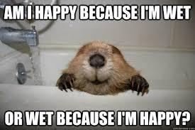 Wet Meme - am i happy because i m wet or wet because i m happy happy wet