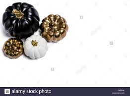 white thanksgiving black gold u0026 white pumpkins thanksgiving fall seasonal still life