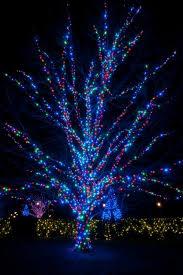 christmas lights tree wrap how to wrap lights around trees wraps lights and christmas lights