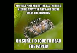 Spider Fire Alarm Meme - tifu by killing a baby spider in front of its mother tifu
