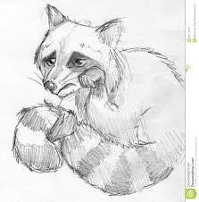 sketch of a fat raccoon stock vector image 93939775