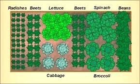 layout kitchen garden how to plan a small garden layout small vegetable garden layout