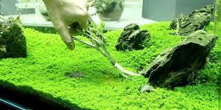 japanese aquascape understanding iwagumi aquascaping style the aquarium guide