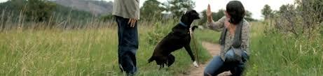 hill u0027s pet nutrition company information hillsvet com