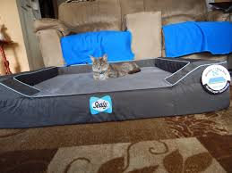 Wrestling Ring Bed by Carma Poodale Ww Molly Mew Wants A Sealy Bed