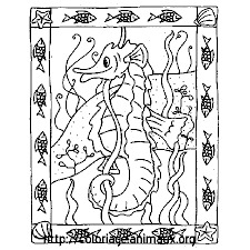 hippocampe et cadre poissons coloriage hippocampe et cadre