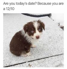 Border Collie Meme - dopl3r com memes are you todays date because you are a 12 10