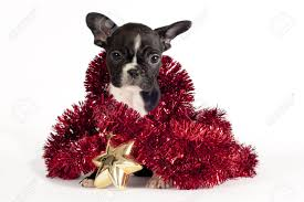 cute french bulldog puppy with christmas ornament on white