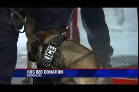 Barker Dog Bed Nbc Wfmz Channel 69