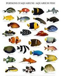 best 25 fish ideas on best aquarium fish