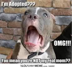 Funny Meme Saying - lol funny meme ermahgerd im adopted