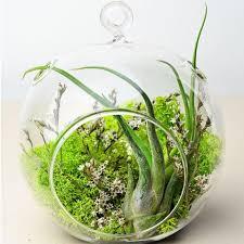 footed glass orb terrarium u2013 ps terrariums