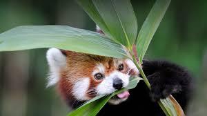 plants san diego zoo animals u0026 plants