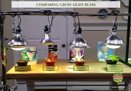 what are the best light bulbs grow lights for beginners start plants indoors the foodie gardener