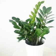 pictures of toxic house plants for cats house pictures