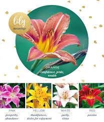 lilies flowers meaning and symbolism ftd