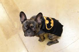 Ghost Dog Halloween Costumes by Halloween Costumes For Pets Become Big Business Toronto Star
