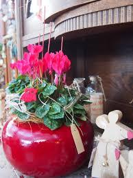 K He Pink Kaufen Floristik Blumen Jungnitsch In Karlsruhe