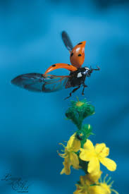Ladybug Home Decor 70 Best Home Decor Wallpapers Nature Images On Pinterest