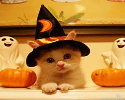 cute animal halloween wallpapers u2013 festival collections
