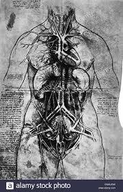 Leonardo Da Vinci Human Anatomy Drawings Fine Arts Leonardo Da Vinci 1452 1519 Anatomical Study