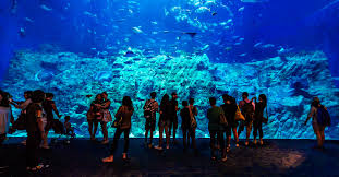 aquarium halloween grand aquarium attractions park experience ocean park hong kong