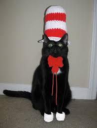 Cat In The Hat Meme - pet costume 002 cat in the hat comics and memes