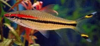 ornamental fish aquarium environment puts miss kerala fish