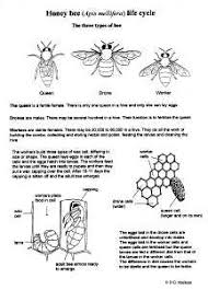 biology insect life cycles information u0026 drawings by d g mackean
