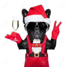 martini glass cheers santa claus dog toasting cheers with champagne glass and victory