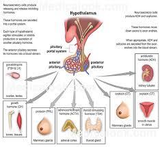 Female Anatomy Organs Female Human Anatomy Organs Human Anatomy Charts